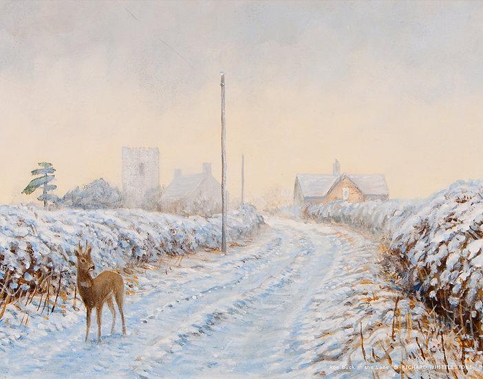Roe Deer In The Lane 2298C (Pack of 3 A5)