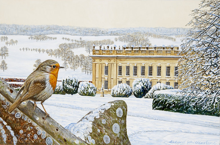 Chatsworth Robin