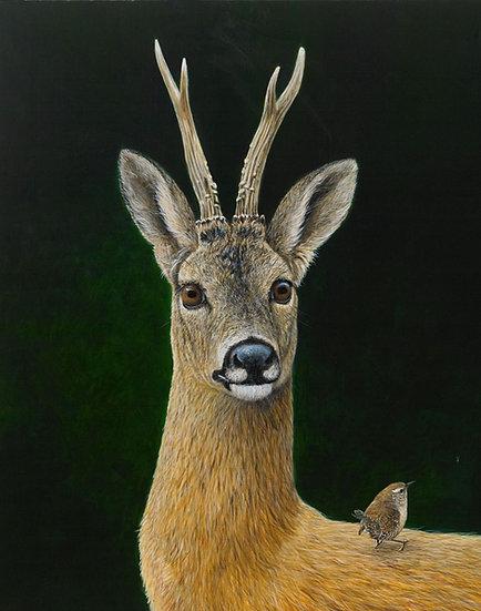 Roe Buck Wren Print by Wildlife Artist Richard Whittlestone