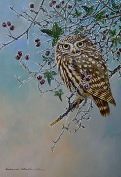 Winter Little Owl