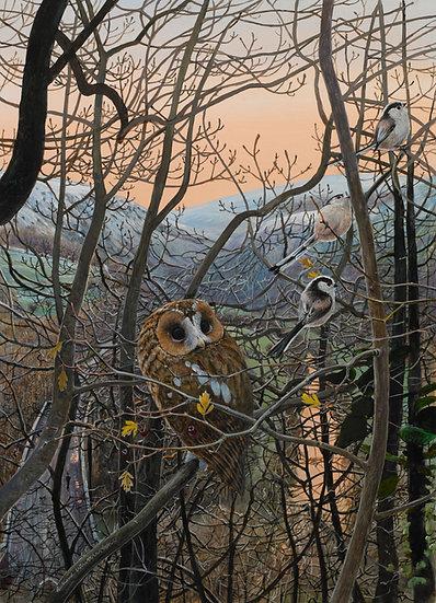 Evening Shadows Owl Bird Painting by Wildlife Artist Richard Whittlestone