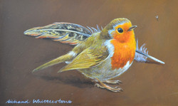 Robin and Pheasant Feather