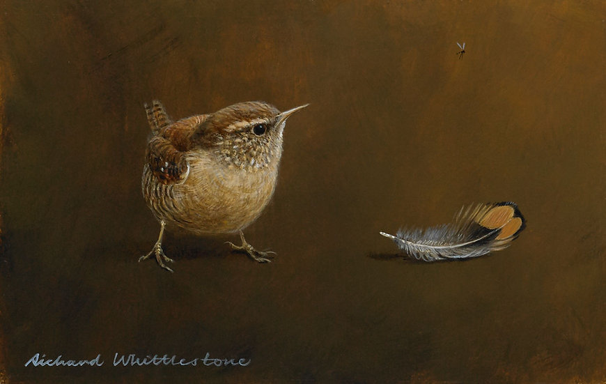 Wren Pheasant Feather Print by Wildlife Artist Richard Whittlestone