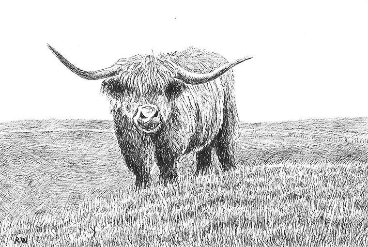 Highland Cow RW017PI