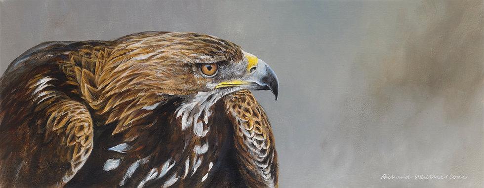 Golden Eagle Portrait RW2807P