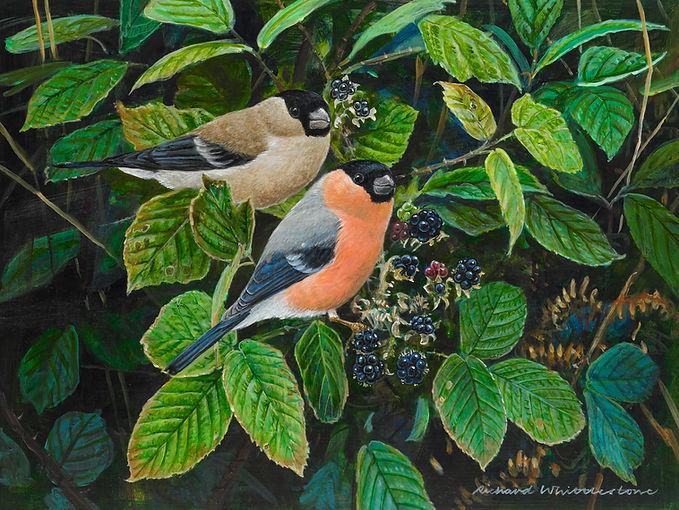 Bullfinches and Blackberries