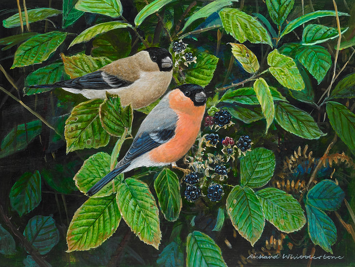 Bullfinches and Blackberries