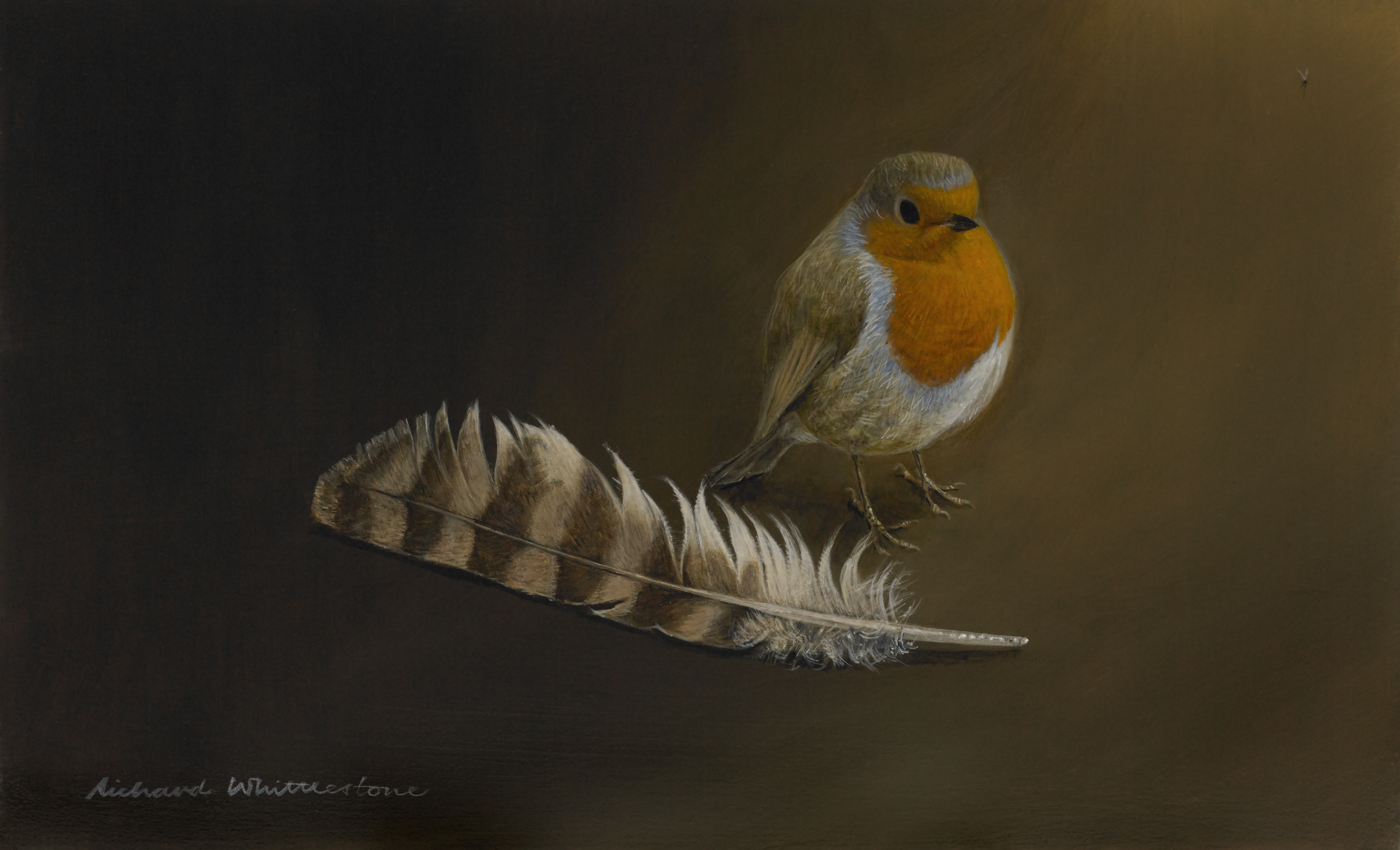 Robin with a Tawny Owl Feather