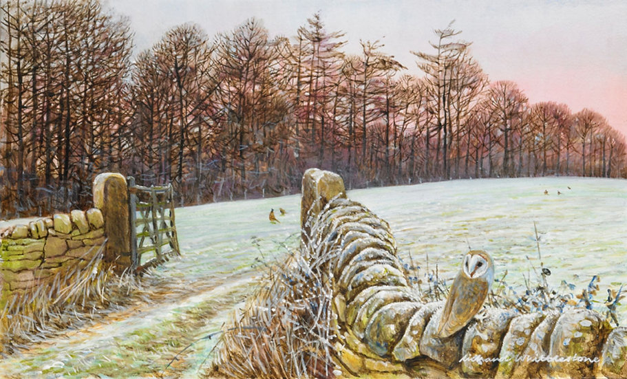Morning Frost Print by Wildlife Artist Richard Whittlestone