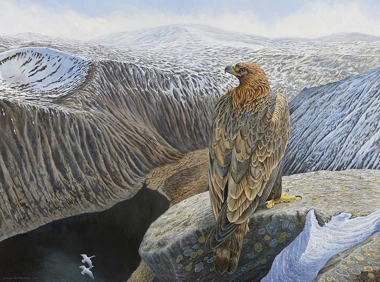 Highland Majesty Bird Print by Wildlife Artist Richard Whittlestone