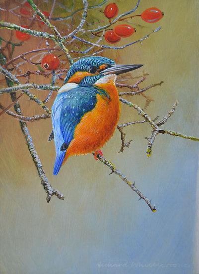 Kingfisher Bird Painting by Wildlife Artist Richard Whittlestone