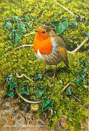Robin with a Snail