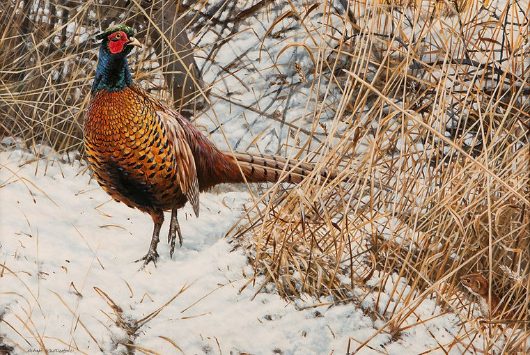 Pheasant in the Snow 707C (Pack of 3 A5)