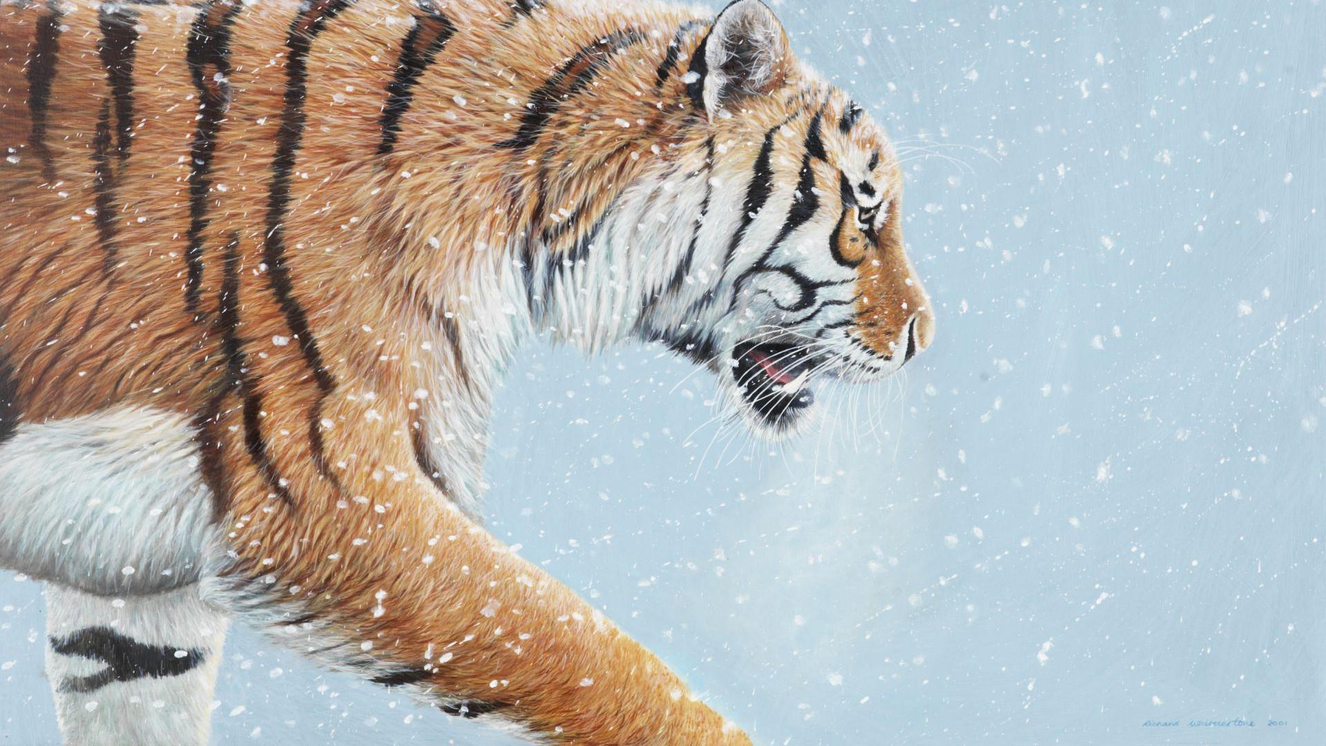 Richard-Whittlestone-Cards-Snow-Patrol