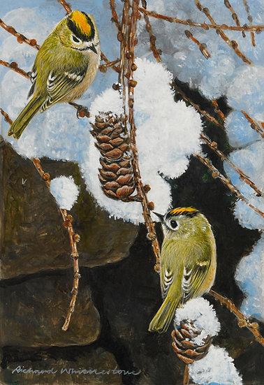 Goldcrests Bird Print by Wildlife Artist Richard Whittlestone