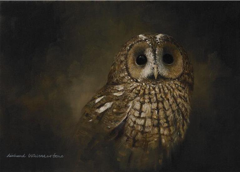 Tawny Owl Portrait Bird Print by Wildlife Artist Richard Whittlestone