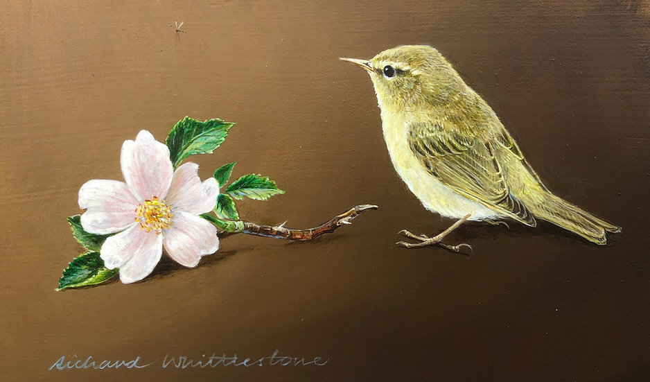 Willow Warbler and Wild Rose