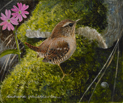 Wren with Red Campion