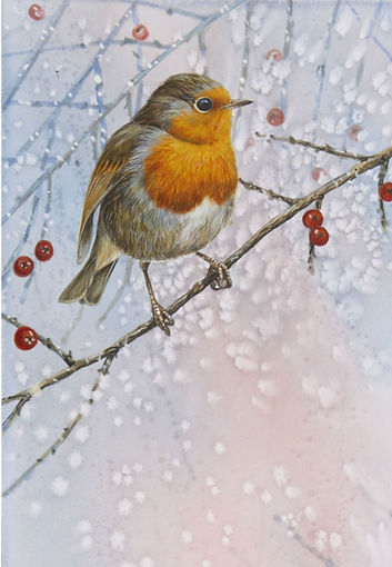 Frosty Robin (Pack of 3)