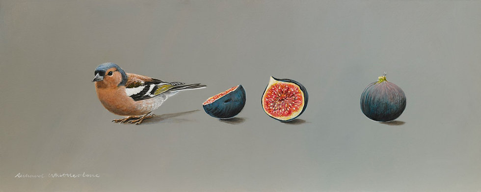 Chaffinch Figs Bird Painting by Wildlife Artist Richard Whittlestone