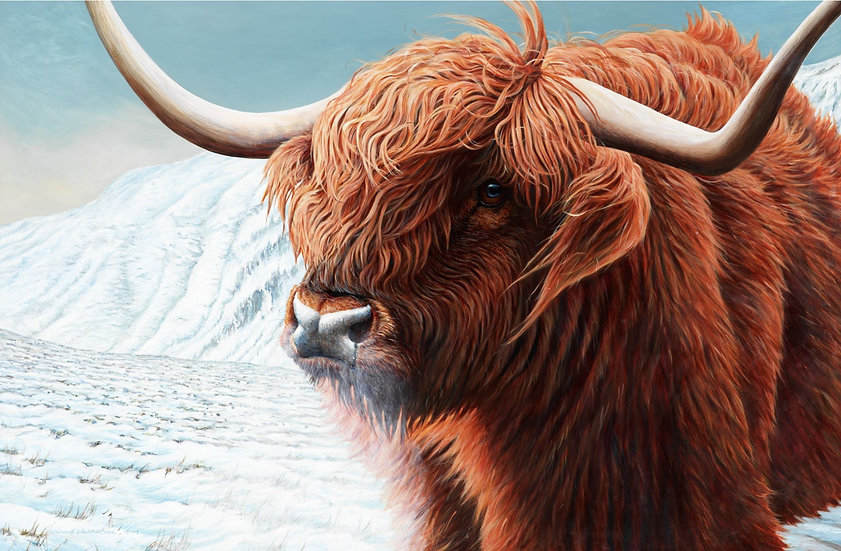 McMoo Highland Cow Print by Wildlife Artist Richard Whittlestone