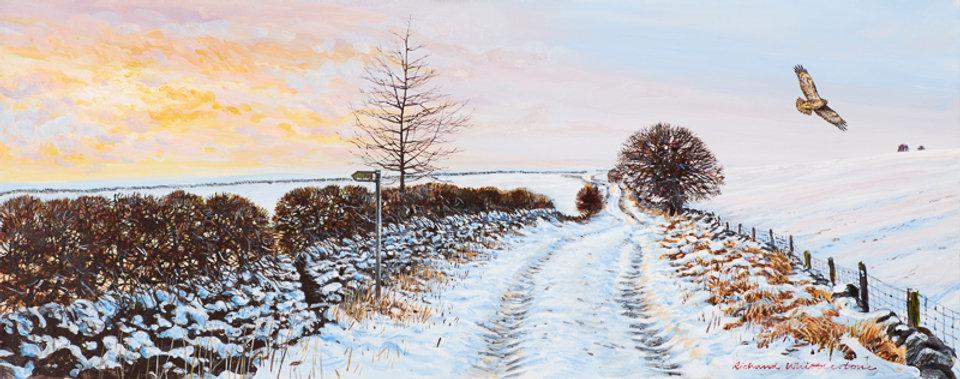 Buzzard over a Winter Lane