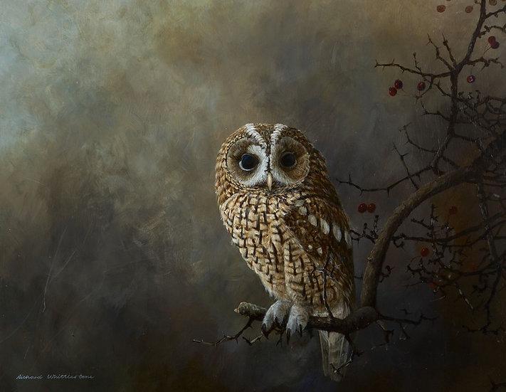 In the Shadows Owl Print by Wildlife Artist Richard Whittlestone