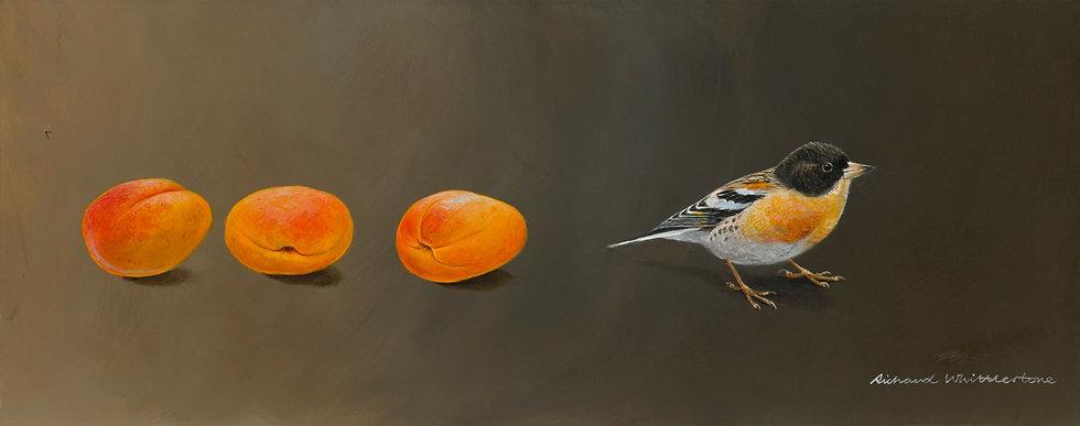 Brambling and Apricots