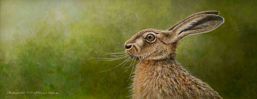 Brown Hare Portrait Print by Wildlife Artist Richard Whittlestone