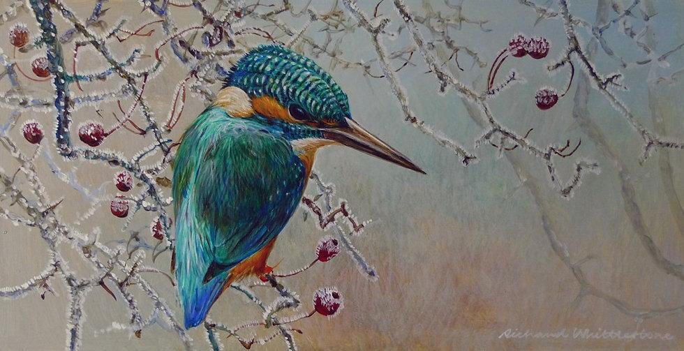 Kingfisher Frosty Hawthorn Bird Print by Wildlife Artist Richard Whittlestone