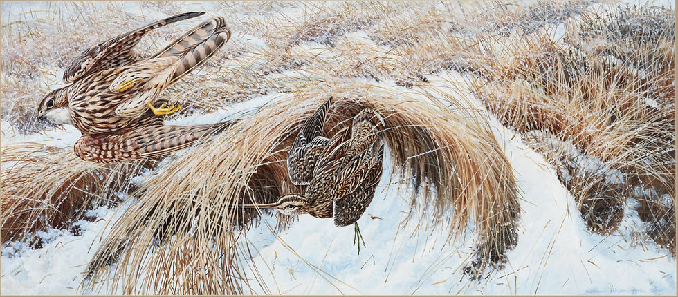 On a Wing and a Prayer Bird Print by Wildlife Artist Richard Whittlestone