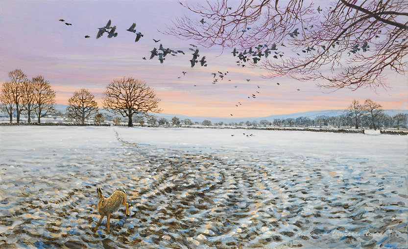 Rooks Over Winter Fields