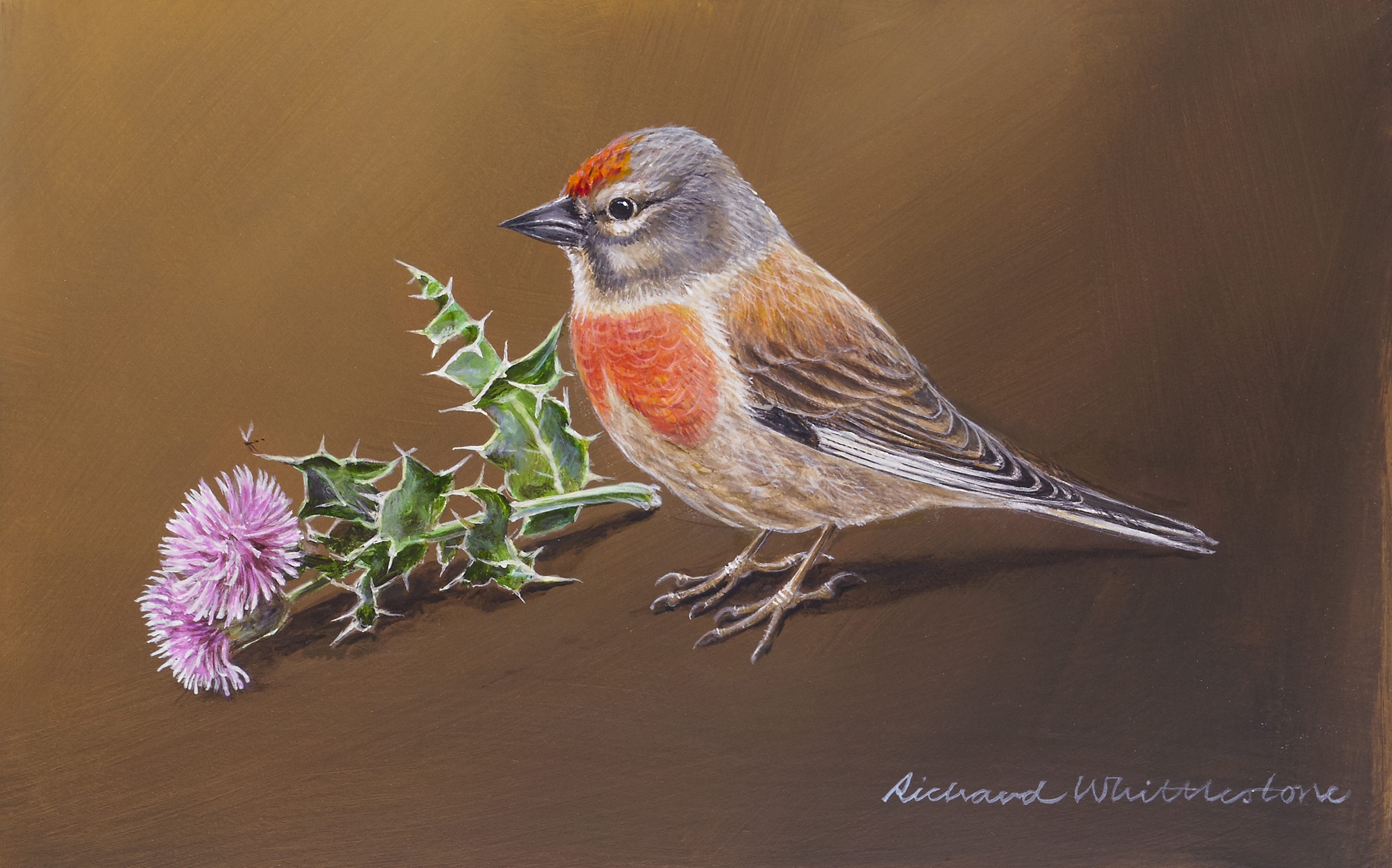 Linnet with Thistle