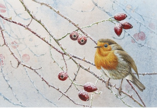 Robin and Rosehips