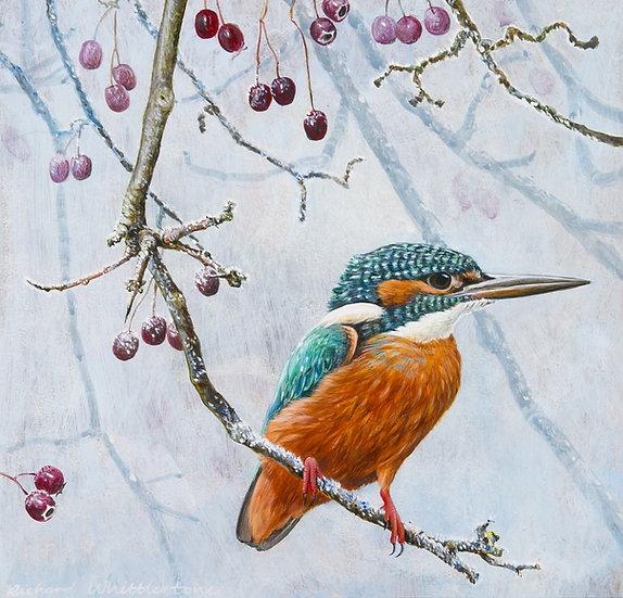 Kingfisher Winter Hawthorn Bird Print by Wildlife Artist Richard Whittlestone