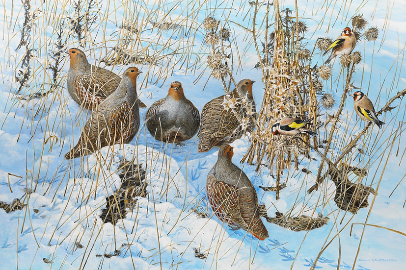 Partridges and Goldfinches