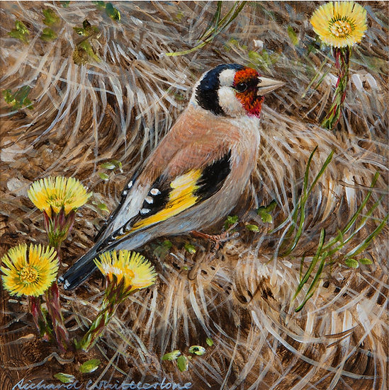 Wildlife Greetings Cards by Artist Richard Whittlestone (Goldfinch Coltsfoot)