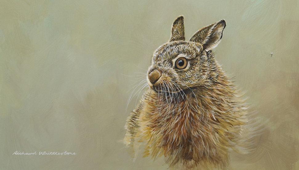 Leveret Portait by Wildlife Artist Richard Whittlestone