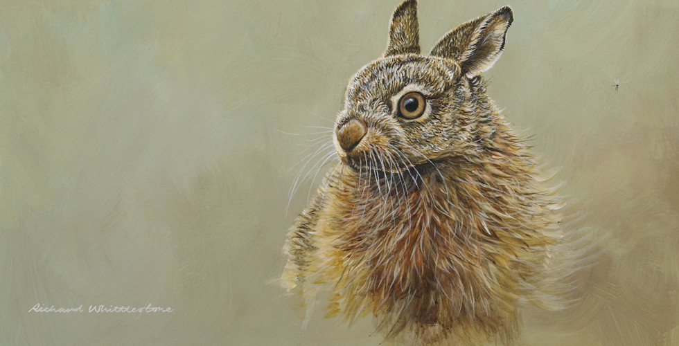 Richard-Whittlestone-Cards-Leveret-Portrait