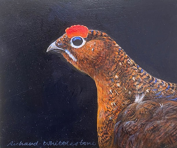 Portrait of a Red Grouse