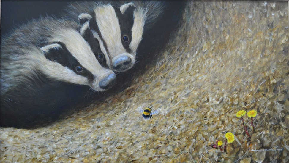 Young Badgers Bee Print by Wildlife Artist Richard Whittlestone