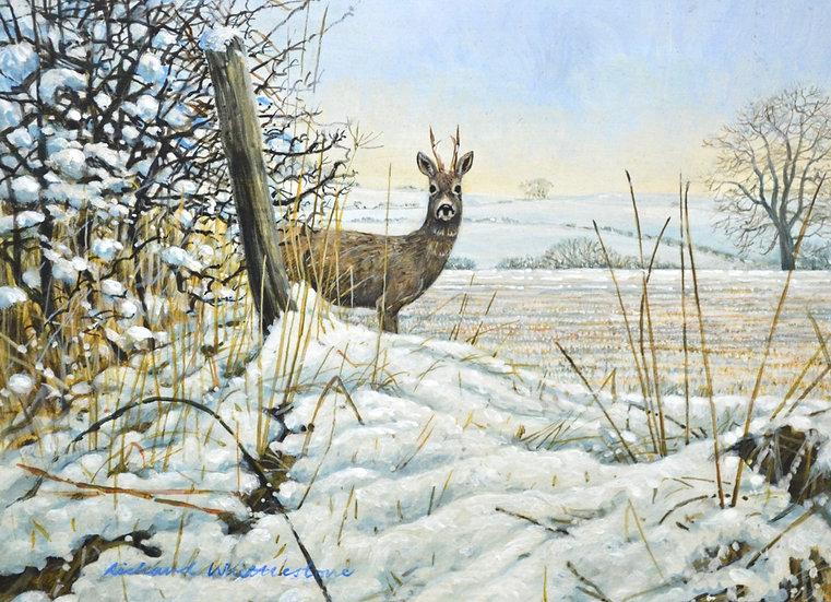 Roe Buck Winter Deer Print by Wildlife Artist Richard Whittlestone