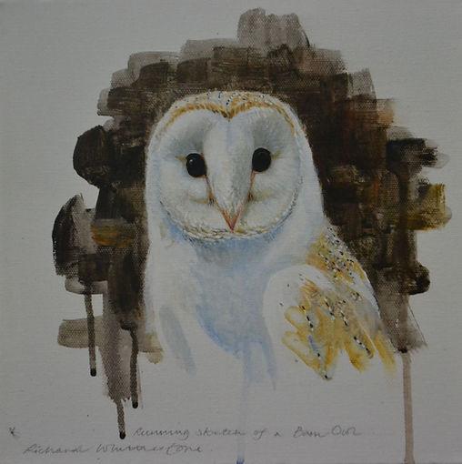 Running Sketch of a Barn Owl
