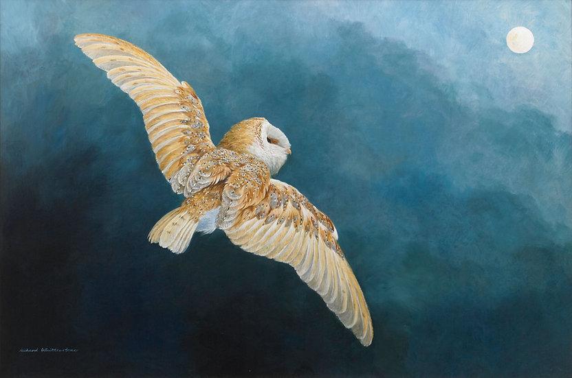 Moonstruck Barn Owl Painting by Wildlife Artist Richard Whittlestone