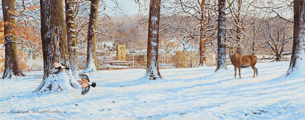 Chatsworth Through Winter Trees RW2684P