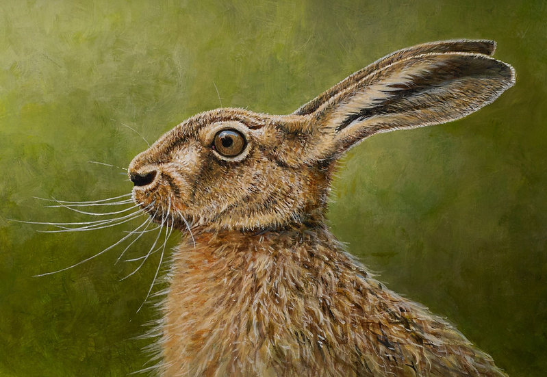 Wildlife Greetings Cards by Artist Richard Whittlestone (Brown Hare)