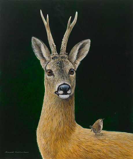 Wildlife Greetings Cards by Artist Richard Whittlestone (Roe Buck and Wren)