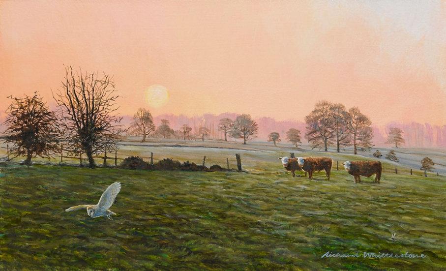 Herefords at Dawn Print by Wildlife Artist Richard Whittlestone