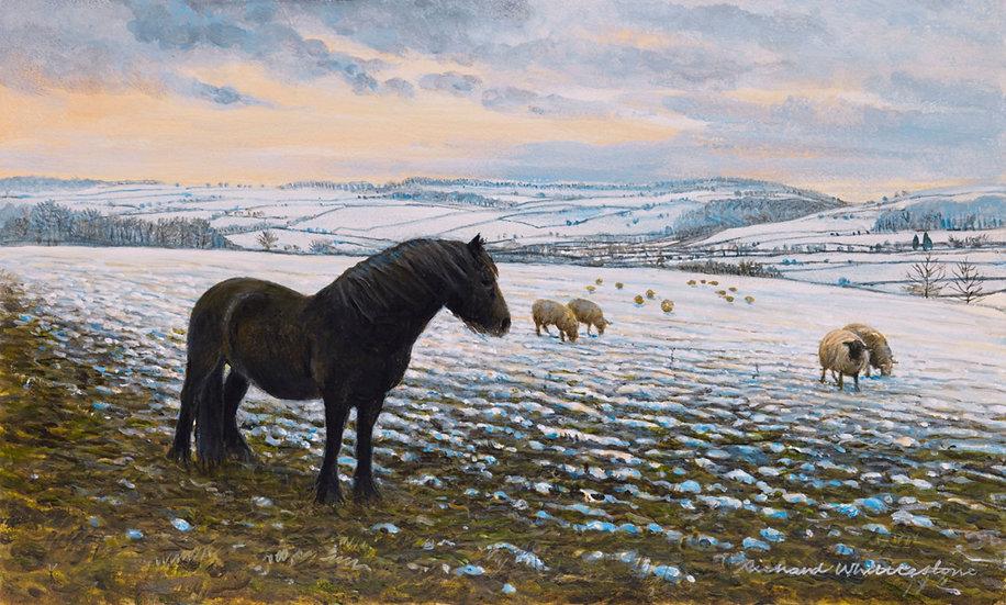 Peak District Winter Print by Wildlife Artist Richard Whittlestone