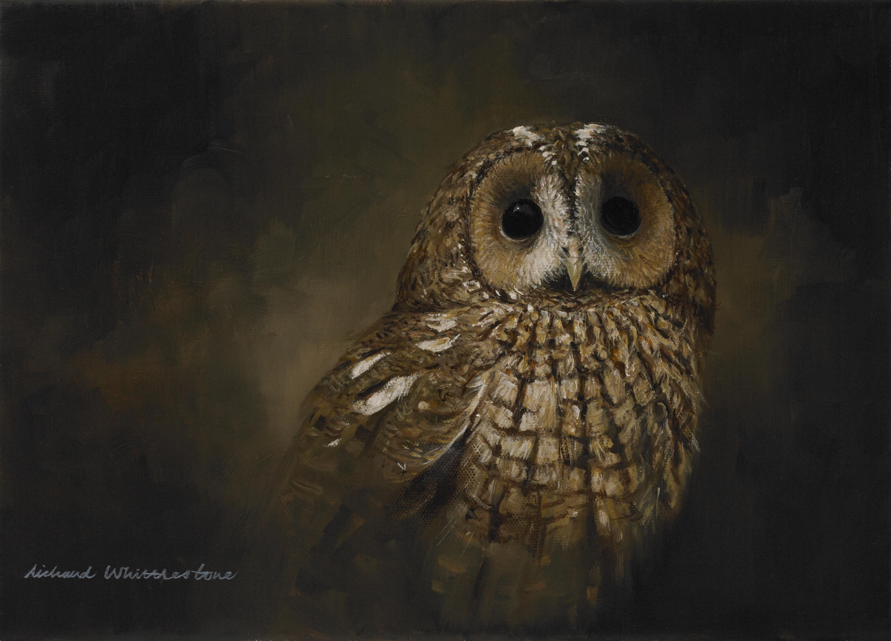 Portrait of a Tawny Owl